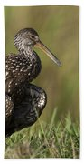 Limpkin Stretching In The Grass Bath Towel