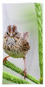 Lincoln's Sparrow Hand Towel