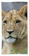 Lion Cub Close Up Bath Towel