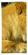 Lion Cub - What A Yummy Snack Bath Towel
