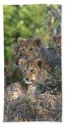 Lion Cubs Awaiting Mom Bath Towel