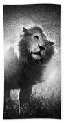 Lion Shaking Off Water Bath Towel