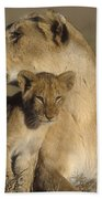Lioness And Her Cub  Bath Towel