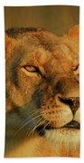 Lioness At Maasai Sunet Bath Towel
