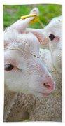 Little Lambs Eat Straw Not Ivy Bath Towel