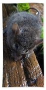 Little 'mighty Mouse' Bath Towel