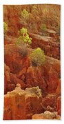 Little Pine Trees Growing On The Valley Cliffs Bath Towel