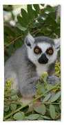 Little Ring-tailed Lemur Bath Towel