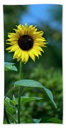 Lone Sunflower  Bath Towel