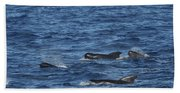 Long-finned Pilot Whales Bath Towel