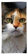 Long Haired Calico Cat Bath Towel