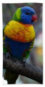 Lorikeet Parrot  Bath Towel