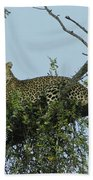 Lounging Leopard Bath Towel