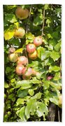 Lovely Apples On The Tree Bath Towel