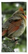 Lovely Female Cardinal Bath Towel