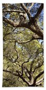Low Angle View Of Trees In A Park Bath Towel