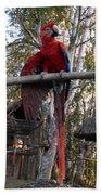 Macaw Guatemala Bath Towel