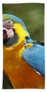 Macaw Bath Towel