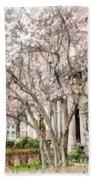 Magnolias In Back Bay Bath Sheet
