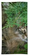 Maine Coon Bath Towel