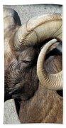 Male Bighorn Sheep Ram Bath Towel