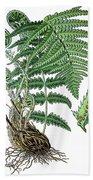 male fern, Dryopteris filix-mas Bath Towel