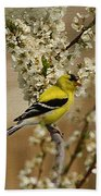 Male Finch In Blossoms Bath Towel