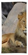Male Lion Resting In The Warm Sunshine Bath Towel