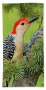Male Red Bellied Woodpecker In A Tree Bath Towel
