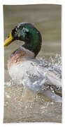 Mallard Duck Bathing Time In Dam Bath Towel