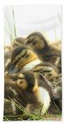 Mallard Ducklings Bath Towel