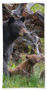 Mama Black Bear With Cinnamon Cubs Bath Towel