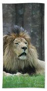 Mane Standing Up Around The Head Of A Lion Bath Towel