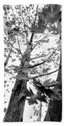 Maple Trees In Black And White Bath Towel