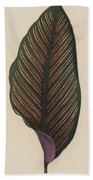 Maranta Regalis Bath Towel