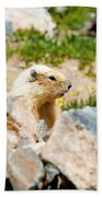 Marmot On Mount Massive Colorado Bath Towel