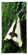 Maryland Clymene Moth Bath Towel