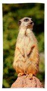 Meerkat 2 Hand Towel