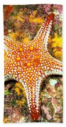 Mexico, Gulf Sea Star Bath Towel