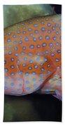 Miniatus Grouper - Cephalopholis Miniata Bath Towel