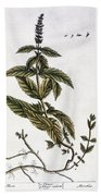 Mint Plant, 1735 Bath Towel