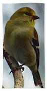 Molting Has Begun - American Goldfinch Bath Towel