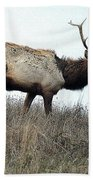 Molting Tomales Bay Elk Bath Towel