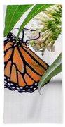 Monarch Butterfly In The Garden 3 Bath Towel