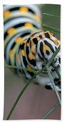 Monarch Caterpillar Clutches Dill In Pincers, Macro Bath Towel