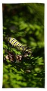 Monarch Caterpillar Bath Towel