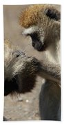 Monkeys Grooming Hand Towel