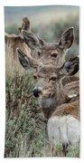 Montana Mule Deer On A Spring Night Bath Towel