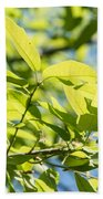 Monterrey Oak Leaves In Spring Bath Towel