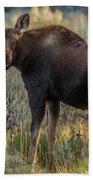 Moose Calf In Fall Colors Bath Towel